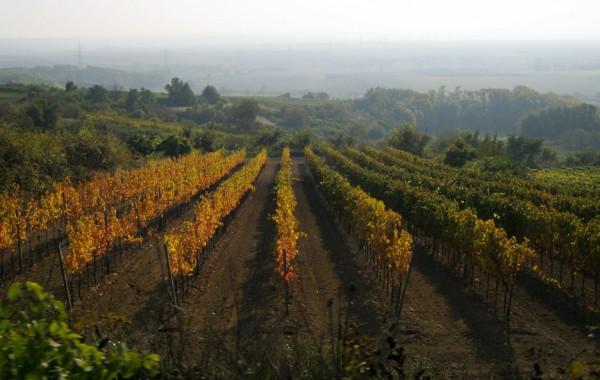 Region Weinviertel